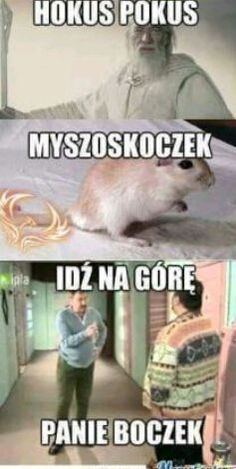 Wtf Funny, Funny Memes, Jokes, Reaction Pictures, Funny Pictures, Polish Memes, Wtf Moments, History Facts, Really Funny