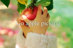 Bucket List - Go Apple Picking Cherry Picking, Fruit Picking, Apple Farm, Apple Orchard, Dont Forget To Smile, Don't Forget, Red Cottage, Just Girly Things, Girl Things
