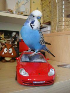 "Please ""Like"" Merlin the Bird on Facebook!"