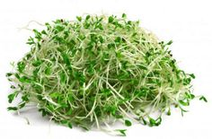 Use organic Alfalfa sprouting seeds to produce masses of tasty alfalfa sprouts in your own home. Growing sprouts at home is easy. Good choice for beginners. Alfalfa Seed, Alfalfa Sprouts, Brussels Sprouts, Superfood, Broccoli Raab, Growing Sprouts, Sprouting Seeds, Mustard Greens, Seed Bank