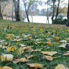 Instagrammer housh45 took this photo of autumn leaves in cold conditions at Lake Ginninderra, Canberra