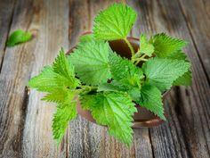 6 recept med nässlor + tips på hur du lyckas Frittata, Mother Nature, Chutney, Weed, Pesto, Food And Drink, Vegetarian, Herbs, Homemade