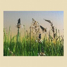 Image result for modern embroidery english meadow grasses