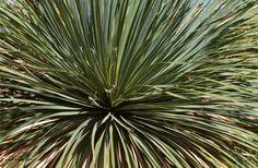 Explosión Barcelona, Spain, Plants, Life, World, Naturaleza, Fotografia, Sevilla Spain, Barcelona Spain