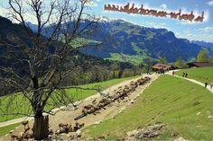kitzbueheler-alpen-essel-super-extrem-gut-aurach-wildpark-esel-klaus-panorama Super, Golf Courses, Dolores Park, Travel, Donkeys, Viajes, Traveling, Trips, Tourism