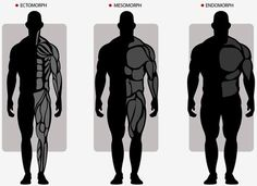 Ectomorph, Endomorph or Mesomorph. Each with different bone and muscular structures.