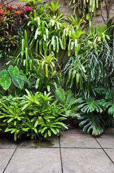 Disguise walls: Try disguising garden walls with a tumble of tropical foliage plants, like this combination of bromeliads, colocasias (taro) and monstera.