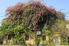 floral hut