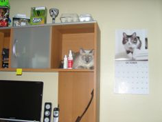 Personal photo of Vicky Hardy. My cat Kelly getting photobombed by a calendar cat.  LOL Had this picture for years and just noticed this.