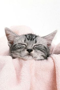 Happy kitty, sleepy kitty, purr purr purr.
