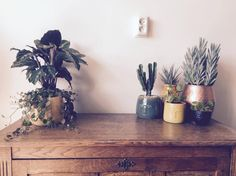My plant family