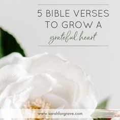 No matter the season, there's always reason to be thankful. These 5 Bible verses point to the Giver of all good gifts and foster a grateful heart. Grateful Prayer, Grateful Heart, Thankful, Bible Verses About Love, Favorite Bible Verses, Christian Devotions, Christian Encouragement, Attitude Of Gratitude, Gratitude Quotes