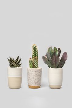 Transform Your Space with Norden's Home Accents - Rip & Tan