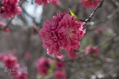Austin, Texas Flower