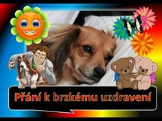 Teddy Bear, Entertainment, Toys, Youtube, Animals, Syrup, Activity Toys, Animales, Animaux