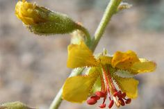 Desert Bloom by JDToomer