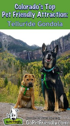 96 Best Dog Friendly Fall Retreats Images On Pinterest Dog Friends