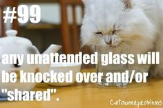 32 Cat Owner Problems You Deal With Everyday