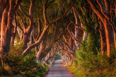joe-daniel-price,the-dark-hedges-ballymoney-county-antrim-northern-ireland,road-trees-ireland-light-photoshop-landscape-photography-photo