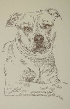 "Dog art drawn entirely from the words American Pit Bull Terrier. These unique fine art 11""x 17"" lithographs, created by drawing the name of the breed over and over, are hand signed and numbered in editions of 500 by internationally known artist Stephen Kline. Kline's dog art has generated tens of thousands of dollars for dog rescues worldwide. drawdogs.com drawdogs.com/..."