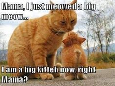 Yes darling you are a big kitteh