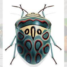 Picasso Shield Bug