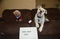 She Said YES!!