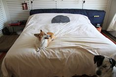 Ace Hotel Palm Springs allows dogs