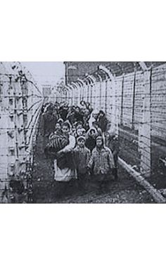 a discussion about the killings in azchwitz concentration camp A special commission of doctors arrived in auschwitz concentration camp on 28 july 1941, and select unfit prisoners mostly from block 15 to be murdered in one of the euthanasia killing centres.