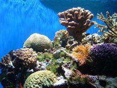 Arrecife de Coral del Parque Nacional Cahuita en Costa Rica