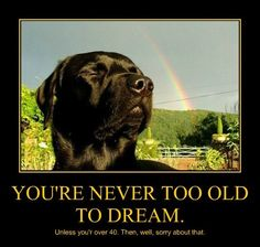 1000 Awesome Things, Never Too Old, Just Give Up, Love Natural, Dog Quotes, Funny Animals, Labrador Retriever, Funny Pictures, Creatures