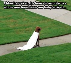 Home Security // funny pictures - funny photos - funny images - funny pics - funny quotes - #lol #humor #funnypictures