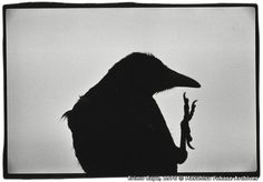 22 FEB: Vintage prints from Masahisa Fukase's Solitude of Ravens are to go on…