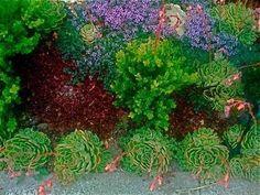 Kid- & Drought-Friendly Non-Grass Backyard Ideas? — Good Questions Kid- & Drought-Friendly Non-Grass Small Yard Landscaping, Cheap Landscaping Ideas, Backyard Ideas For Small Yards, Succulent Landscaping, No Grass Backyard, Backyard Garden Design, Backyard Fences, Sloped Backyard, Drought Resistant Plants
