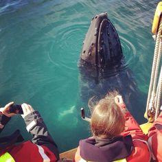 Whale watching in Húsavík, Iceland