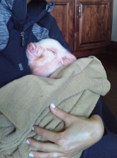 When deciding if a mini pig is the right pet for you, there are mini pig pros and cons to consider. I'll start with mini pig pros first. Micro Mini Pig, Tiny Pigs, Pet Pigs, Pocket Pig, Baby Animals, Cute Animals, Miniature Pigs, Teacup Pigs, Animals