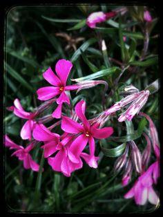 So pink... So happy