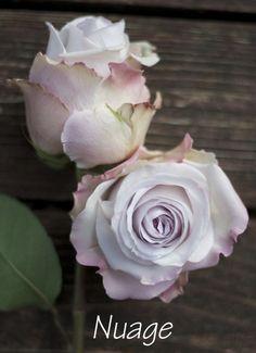 Image from http://flirtyfleurs.com/wp-content/uploads/2013/07/MG_3250.jpg.