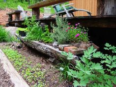 Scooped Out Log Centerpieces With Plants