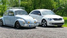 Both the beetles nice and clean.