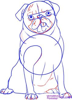 how to draw a pug dog step 4