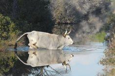 Die Serengeti der Toskana: Parco Naturale della Maremma   Maremma Geheimtipp