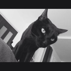I heard a call that he meows from behind me. So, when I looked back, there was his face before my eyes. #love #cat #chat #katze #chatnoir #schwarzekatze #blackcat #photo #monochrome #instaphoto #instapic #instadiary #instadaily #猫 #ネコ #ねこ #黒ネコsho.okajiri2016/02/10 17:02:58
