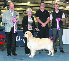 Love in the air at SKC #dogs #dogshows #dogshowing #PupoftheYear #competition