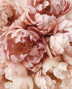 Loooving this sunshine and warmth. Also loving the peonies popping up everywhere- always the best sign that summer is on her way. Royal Garden, Deco Floral, Flower Aesthetic, Horticulture, Creative Photography, Aesthetic Wallpapers, Planting Flowers, Flower Arrangements, Beautiful Flowers
