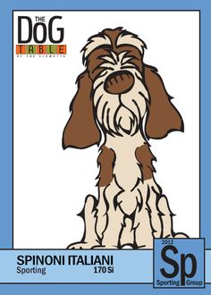 Spinone Italiano from the Sporting Group - Dog Breed Trading Cards    http://dogbreedtradingcards.tumblr.com/post/19179414140/170-si-spinone-italiano-from-the-sporting-group