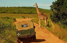 Tanzanya'dan Uzungöl'e Jeep Safari Macerası