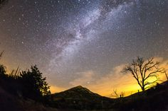 The Milky Way and silhouette of burnt tree
