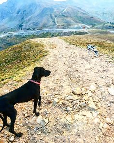 The kids had a great time running around Loveland Pass last evening.  There's still snow up in them there hills too!!