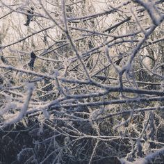 More Hoar Frost. 12/2015 - Chris Drobny Pictures